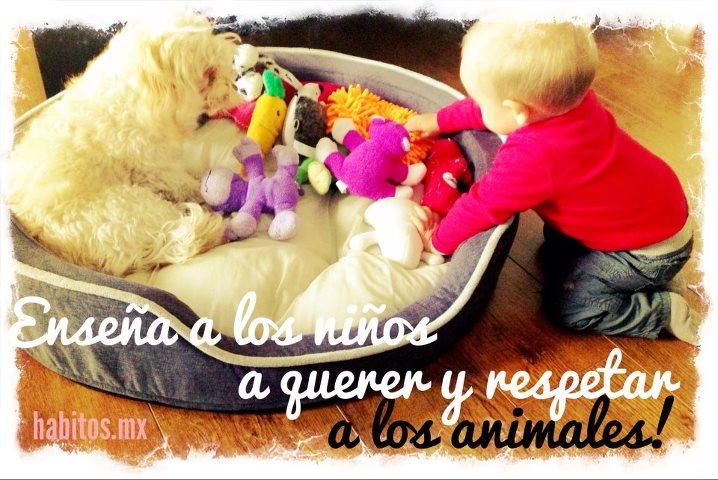Bebés - respetar a las mascotas
