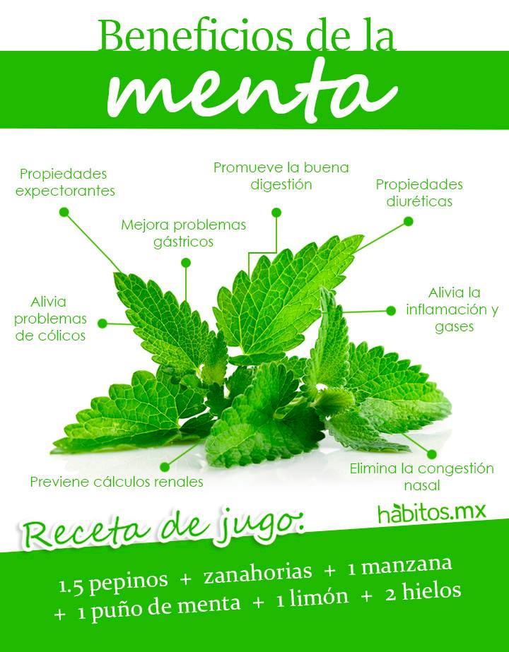 Habitos Health Coaching Los Beneficios De La Menta