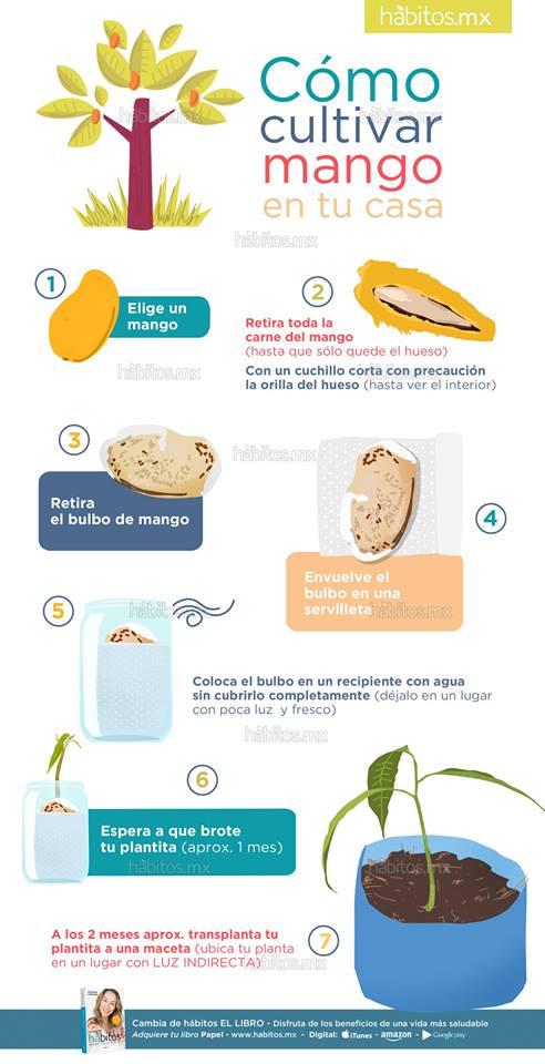 H bitos health coaching c mo cultivar mango en tu casa for Como cultivar peces en casa