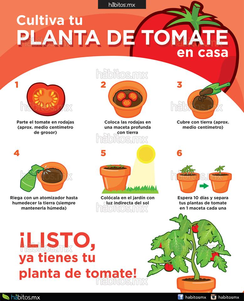 H bitos health coaching cultiva tu planta de tomates en casa for Como cultivar peces en casa